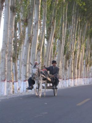 ホータンのポプラ並木