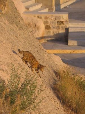 カッパドキア ウチヒサールのネコ