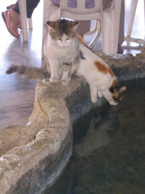 水を飲むドライブインのネコちゃん