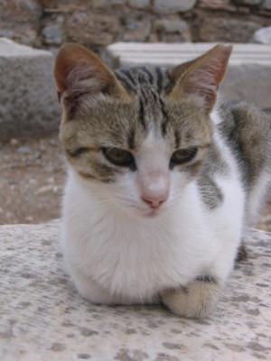 エフェソス遺跡のネコ