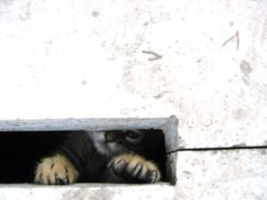 エディルネ セリミエモスクのネコ