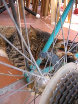 プリンス諸島のネコ