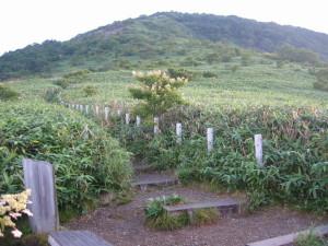 三国山 お花畑