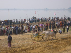 アマラプラ タウンタマン湖の牛馬車レース