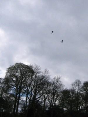 ポウィスキャッスル二羽の白鳥