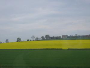 イングランド 菜の花畑