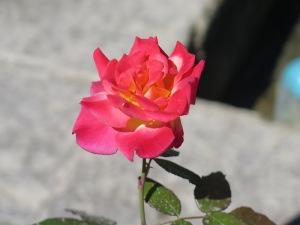 カシャーン フィン庭園