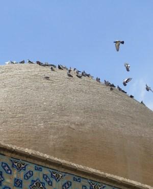 イスファハン 金曜日のモスク 鳥