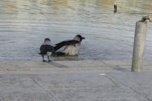 イスファハン イマーム広場 鳥