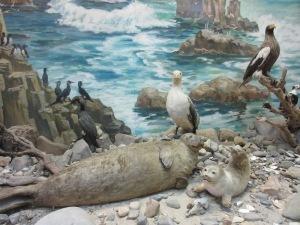 沿海州の動物たち