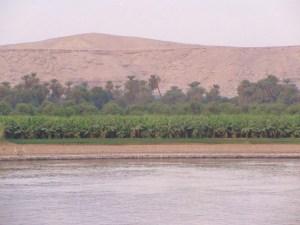 ナイルの砂漠とヤシの風景