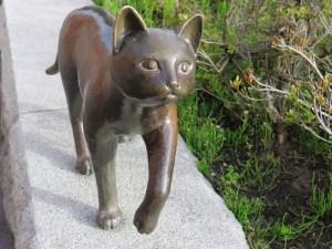 函館ベイエリアのネコ