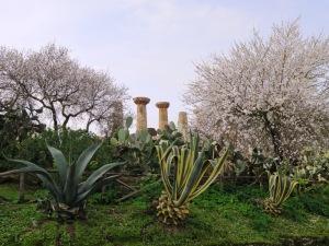 ヘラクレスの神殿とアーモンドの花