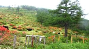 湯の丸高原牧場