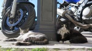 シチリア・シラクーサ・オルティジア島の猫