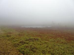 東御 池の平湿原 鏡池
