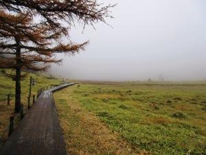 東御 池の平湿原