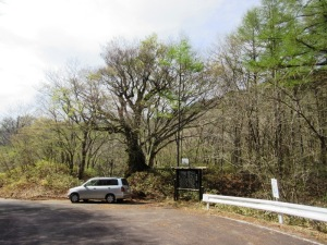万騎峠 目印の大くすの木し