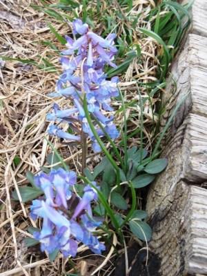 オロンコ岩に咲く花