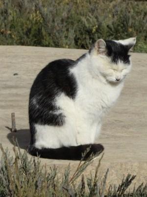 莫高窟 日向ぼっこする猫ちゃん
