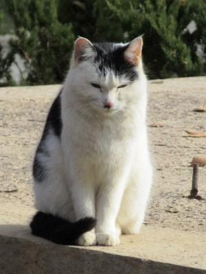 莫高窟で日向ぼっこする猫ちゃん2