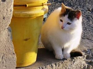 瓜州県高速SAエリア出店の猫ちゃん