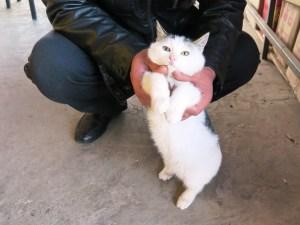 瓜州県高速SA出店の猫ちゃん