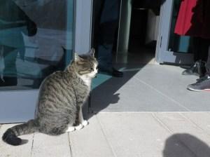 楡林窟入場ゲートの猫ちゃん