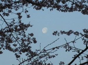 令和3年桜と月